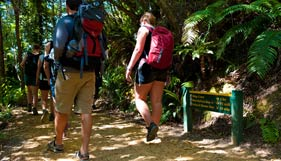 Queen Charlotte Track Walks